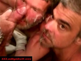 Two straight mature bears share facial | bears best   facial top   masturbating   mature   share   straight
